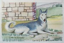 China e matite colorate 'Il grande Husky'